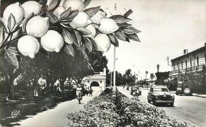 """CPSM ALGERIE  """"Perregaux, avenue de Verdun"""""""