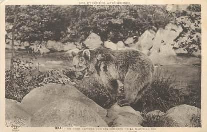 """/ CPA FRANCE 09 """"Un ours capturé sur les sommets de la haute Ariège"""""""
