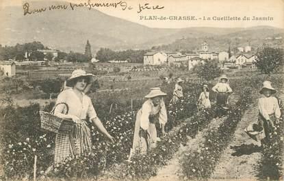 "CPA  FRANCE 06 ""Plan de Grasse, cueillette du Jasmin"""