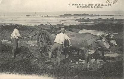 """CPA FRANCE 44 """"Saint Michel Chef chef, la Cueillette du Goëmon"""""""