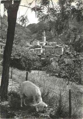 """/ CPSM FRANCE 06 """"Lucéram, village médiéval"""" / CHEVRE"""
