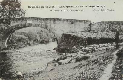 """/ CPA FRANCE 83 """"Environs de Toulon, le Gapeau, moutons en pâturage"""""""