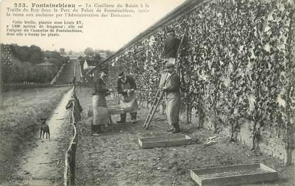 """/ CPA FRANCE 77 """"Fontainebleau, la cueillette du raisin"""""""