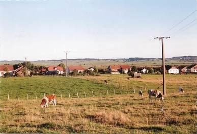 """/ CPSM FRANCE 25 """"Sainte Colombe, une partie du village"""""""