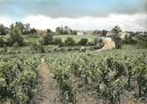 """33 Gironde / CPSM FRANCE 33 """"Pauillac, vignobles de Bâges"""""""