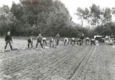 """/ CPSM FRANCE 71 """"Pépinières Letourneau Burgy, plantation d'une pépinière"""""""