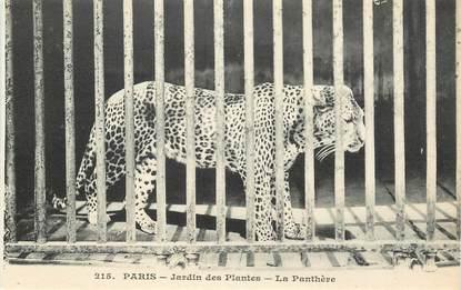 """CPA FRANCE 75005 """"Paris, panthère"""" / JARDIN DES PLANTES / ZOO"""