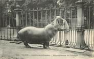 """75 Pari CPA FRANCE 75005 """"Paris, Hippopotame"""" / JARDIN DES PLANTES / ZOO"""