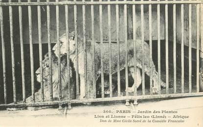 """CPA FRANCE 75005 """"Paris, Lion et Lionne"""" / JARDIN DES PLANTES / ZOO"""