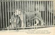 """75 Pari CPA FRANCE 75005 """"Paris, Lion et Lionne"""" / JARDIN DES PLANTES / ZOO"""