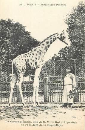 "CPA FRANCE 75005 ""Paris, Girafe"" / JARDIN DES PLANTES / ZOO"