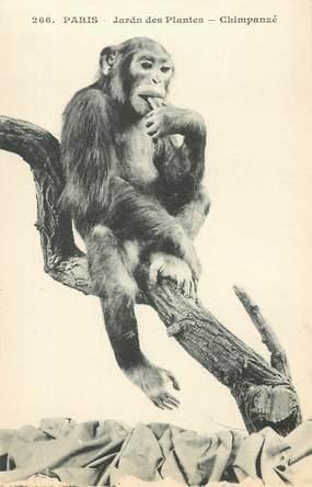 """CPA FRANCE 75005 """"Paris, Singe Chimpanzé"""" / JARDIN DES PLANTES / ZOO"""