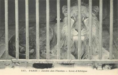 """CPA FRANCE 75005 """"Paris, Lion"""" / JARDIN DES PLANTES / ZOO"""