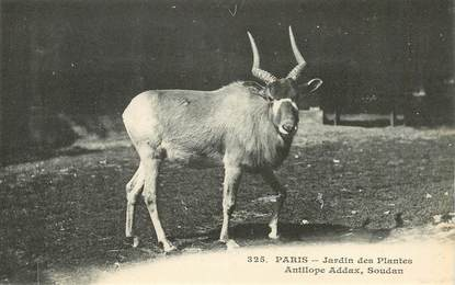 "CPA FRANCE 75005 ""Paris, Antilope"" / JARDIN DES PLANTES / ZOO"
