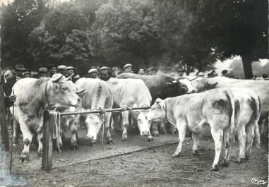 """/ CPSM FRANCE 71 """"Charolles, spécimen de la race Charollaise"""""""