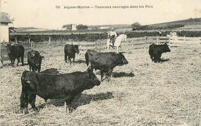 """/ CPA FRANCE 30 """"Aigues Mortes, taureaux sauvages dans les prés"""""""