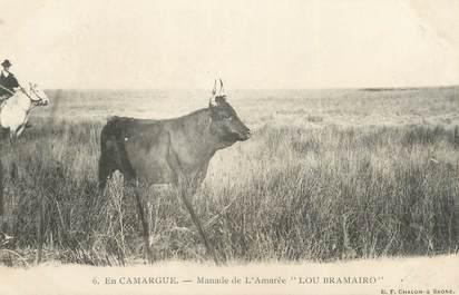 """/ CPA FRANCE 13 """"En Camargue, manade de l'Amarée, Lou Bramairo"""""""