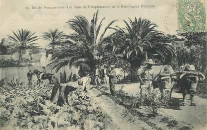 """CPA FRANCE  83 """"Ile de Porquerolles, Exploitation de la compagnie foncière"""""""