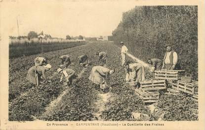 """FRANCE 84  """"Carpentras, la cueillette des fraises"""""""