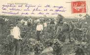 Theme CPA LES VENDANGES / ALCOOL