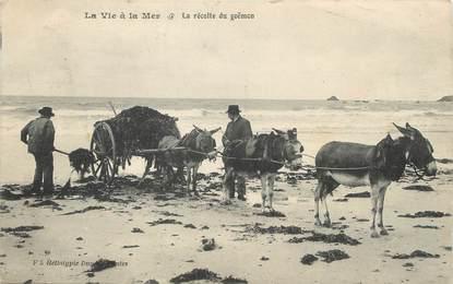 """/ CPA FRANCE 44 """"La vie à la mer, la récolte du Goëmon"""" / ÂNE"""