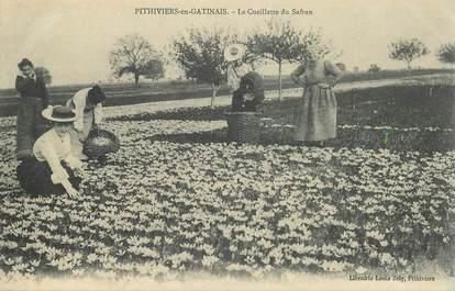 """CPA FRANCE 45 """"Pithiviers en Gatinais, la cueillette du Safran"""""""