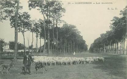 """CPA FRANCE 91 """"Montgeron, les moutons"""""""