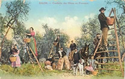 "/ CPA FRANCE 13 ""Salon, cueillette des Olives en Provence"""