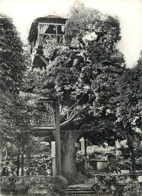 "/ CPSM FRANCE 92 ""Plessis Robinson, le vrai arbre Robinson"""