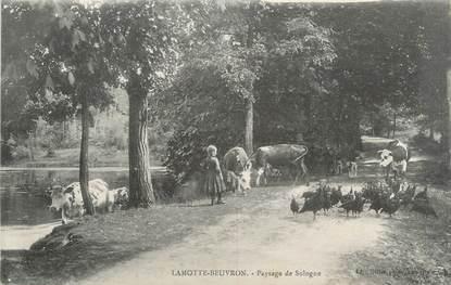 """.CPA FRANCE 41 """"La Motte Beuvron, Paysage de Sologne"""""""