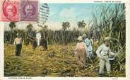 """Antille CPA CUBA """"Récolte de la Canne à sucre"""""""