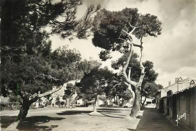 """CPSM FRANCE 83 """" Hyères, la grande place sous les pins"""""""