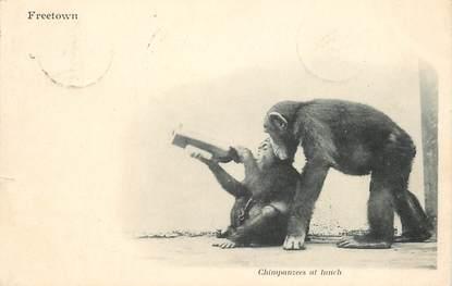 "CPA   SOMALIE ""Chimpanzee"" / SINGE"