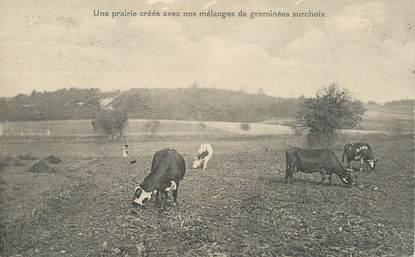 """CPA FRANCE 37 """"Cinq Mars la Pile, Une prairie créée avec nos mélanges de graminées """""""