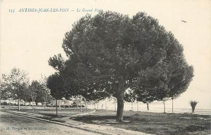 """.CPA FRANCE 06 """"Antibes-Juan les Pins, Le grand pin"""""""