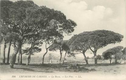 ".CPA  FRANCE 06  "" Cannes- la Bocca, Les pins"""