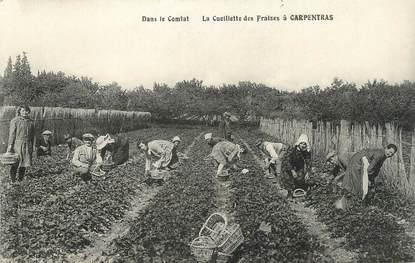 """.CPA  FRANCE 84 """" Carpentras, Cueillette  des fraises """""""