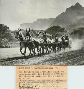 """PHOTO ORIGINALE / AFRIQUE DU SUD """"les fermiers sud africains avec leur attelage de mules, 1948"""""""
