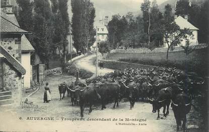 """CPA FRANCE 63 """" L'Auvergne, Troupeaux descendant de la montagne"""". / FOLKLORE"""