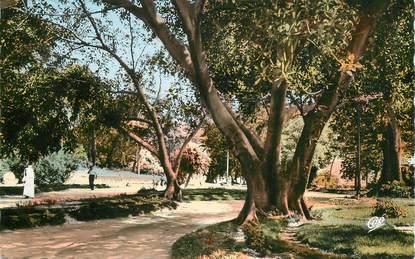 """CPSM ALGERIE """"Mostaganem, le jardin public"""""""