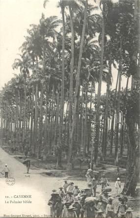 "CPA GUYANE ""Cayenne, le palmier bifide"" / BAGNARD"