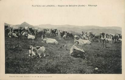"""CPA FRANCE 11 """"Plateau de Langral, Un pâturage""""."""
