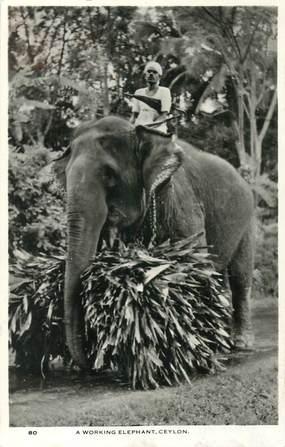 "CPA SRI LANKA / CEYLAN ""Eléphant"""