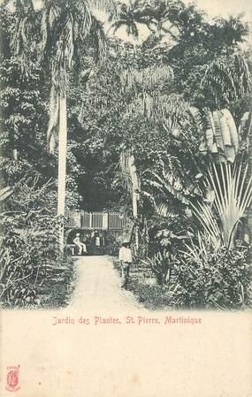 """CPA MARTINIQUE """"Jardin des Plantes, Saint Pierre"""""""