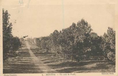 "CPA MAROC ""Kenitra, un coin de la Forêt"""