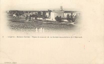 """CPA ALGERIE """"Maison Carrée, Vigne de Muscat de la Sté Immobilière de l'Harrach"""" / GEISER"""