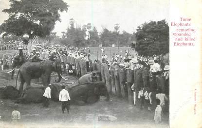 """CPA THAILANDE / SIAM """"Eléphants"""""""