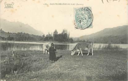 """CPA FRANCE 73 """" St Hélène du Lac, Deux vaches au champ"""""""