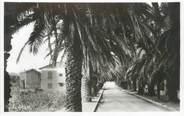 """83 Var CPSM FRANCE 83 """" Les Lecques , Allée des Palmiers"""""""