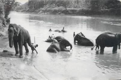 CARTE PHOTO ELEPHANT
